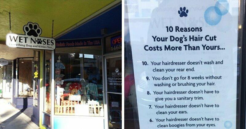 10 забавных причин, почему стрижка собаки дороже человеческой