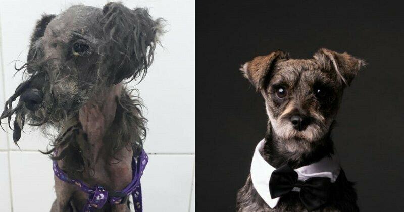 28 фотографий о том, как любовь и забота преображают бездомных собак