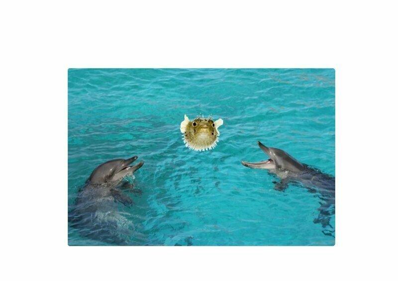 """Дельфины """"наркоманы"""": ученые застали дельфинов за употреблением"""