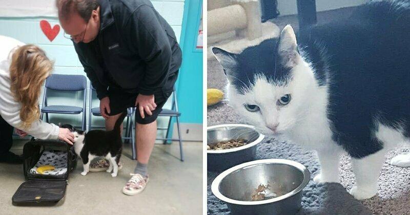 Самая ужасная кошка в мире по кличке Пердита нашла новый дом