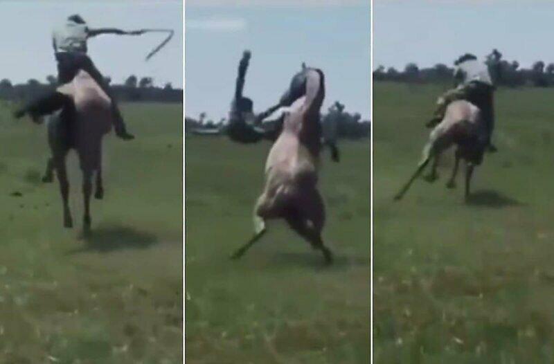 Прокатился с ветерком: конь эффектно скинул своего наездника