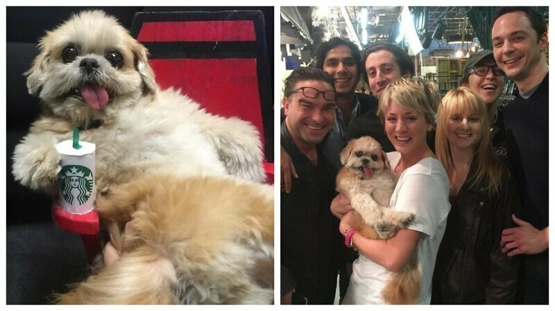 Уморительная Марни: собака, у которой 2 миллиона подписчиков