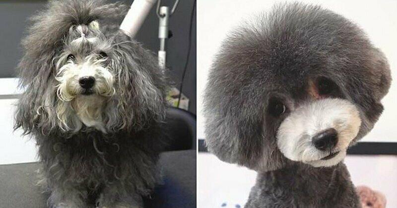 Талантливый грумер превратил лохматую собаку в принцессу