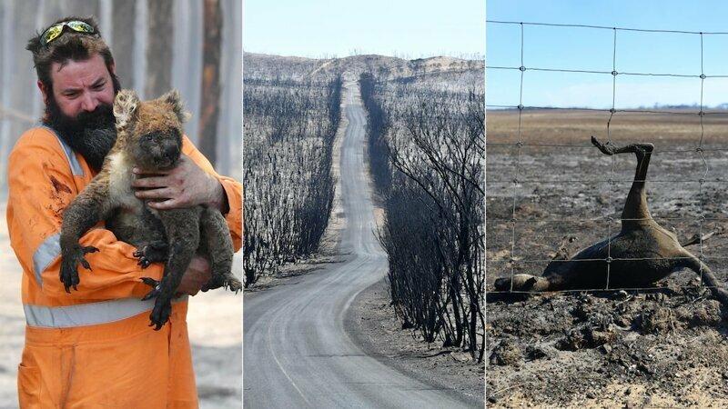 Можно ли пить австралийское вино после пожаров