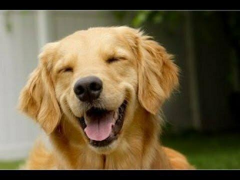 Позитивные собаки и щенки