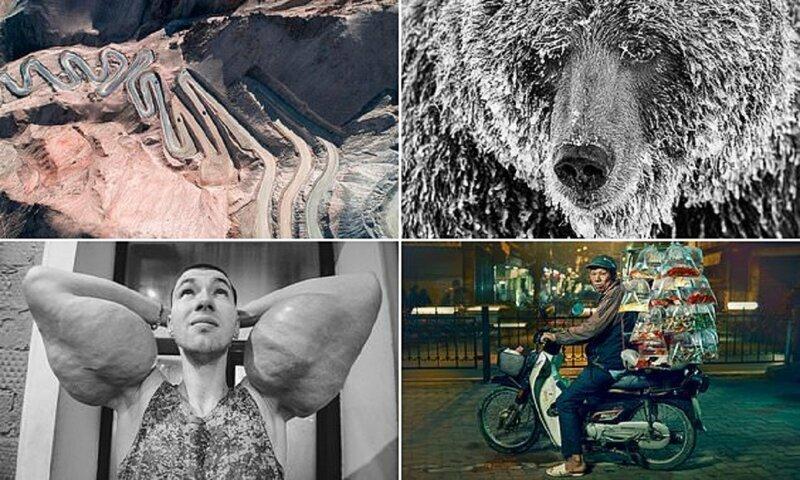 Жюри Sony World Photography Award выбрало лучшие снимки для финального голосования