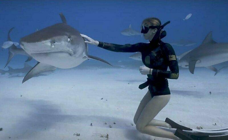 Профессиональная дайверша близко познакомилась  с тигровой акулой
