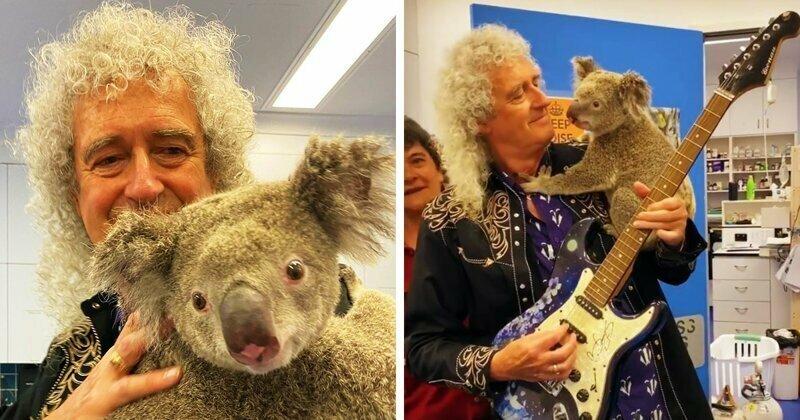 Гитарист Queen устроил концерт для спасённых от пожара коал