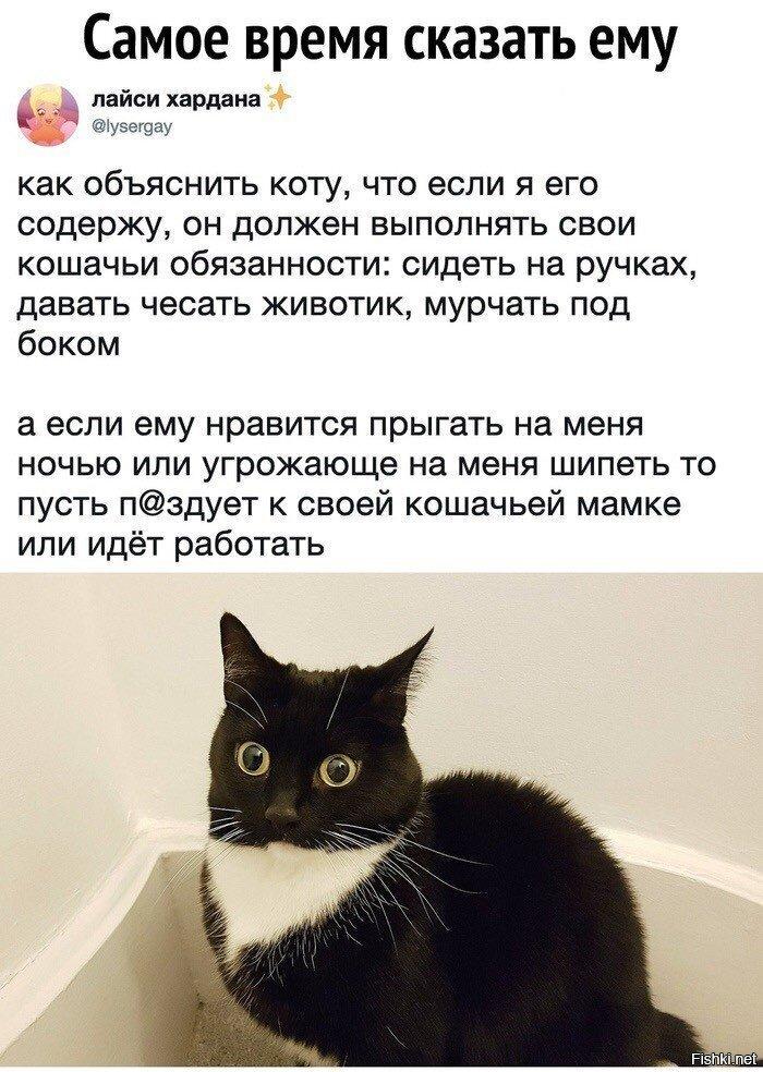 Кот, нам нужно серьезно поговорить