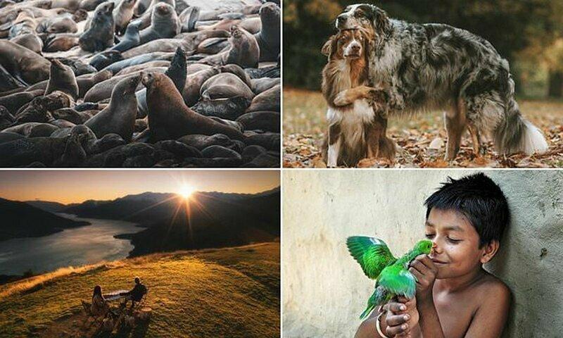 Любовь вокруг нас: лучшие фотографии конкурса Agora про любовь и нежность