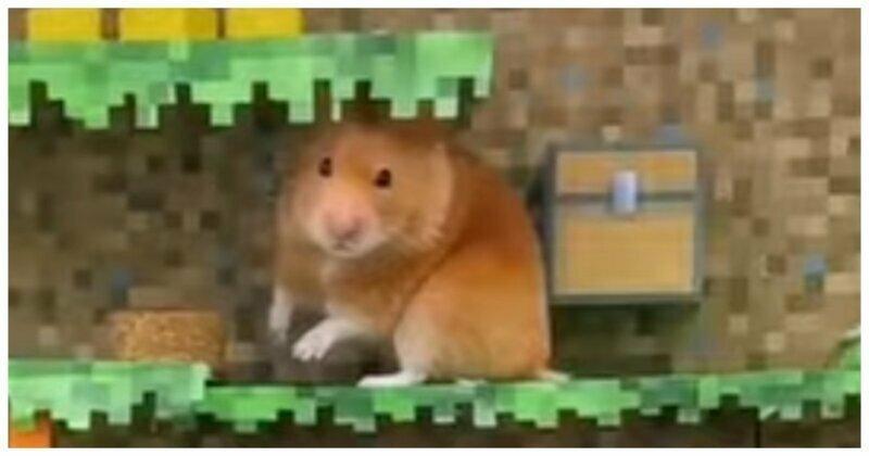 Приключения потешного хомяка в большом картонном лабиринте