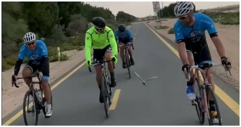 Пернатый путешественник составил компанию велосипедистам