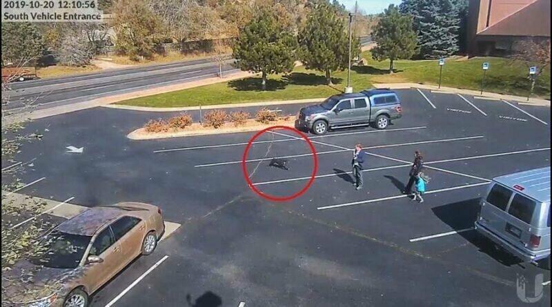 Жуткое видео: собака напала на 5-летнюю девочку