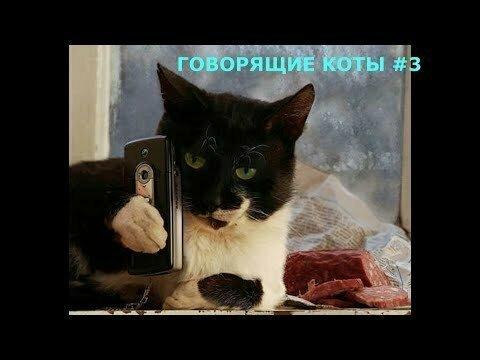 Говорящие коты