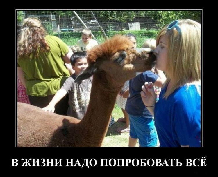 Новые прикольные демотиваторы по-русски