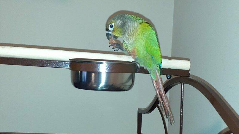 В США попугай спас семью от пожара