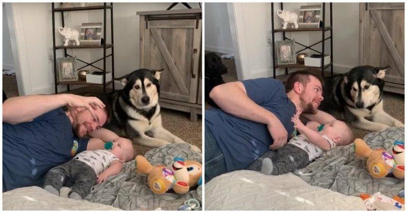 Собачья ревность во всей красе