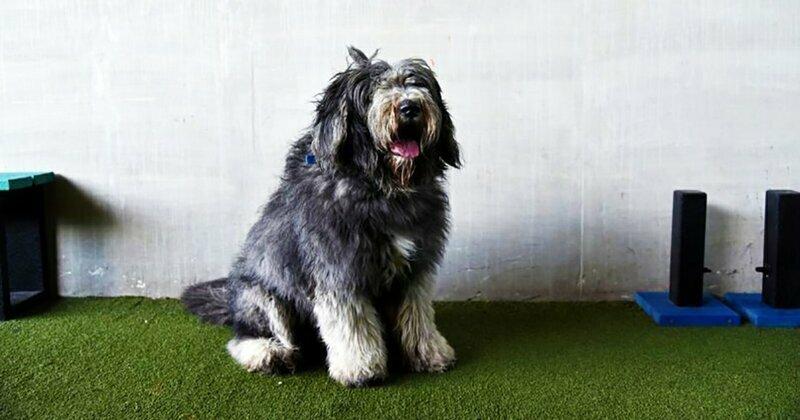 Брошенный пёс зарос до состояния кустарника