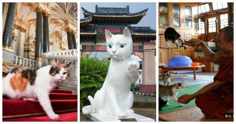 7 удивительных мест, которые определённо понравятся любителям котиков