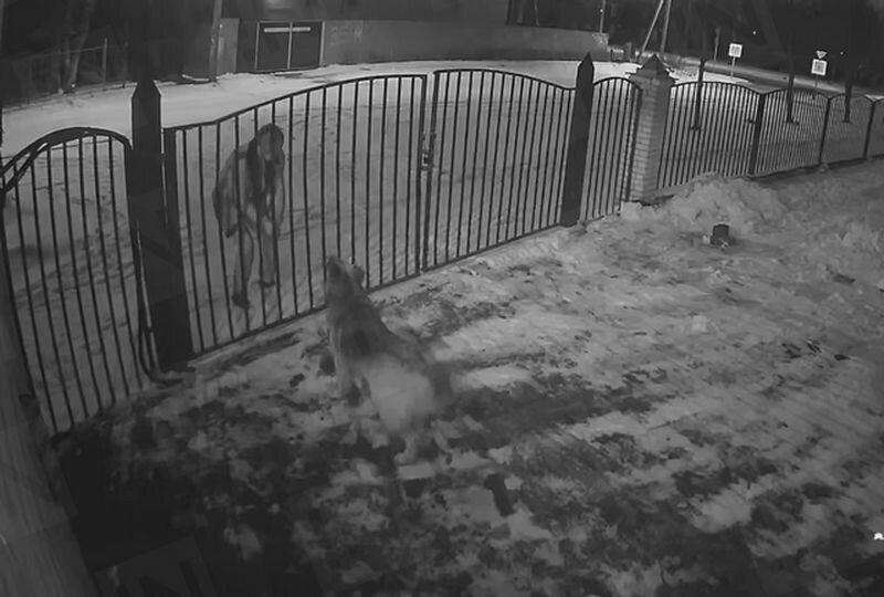 Мужчина выстрелил петардой в морду облаявшей его собаке