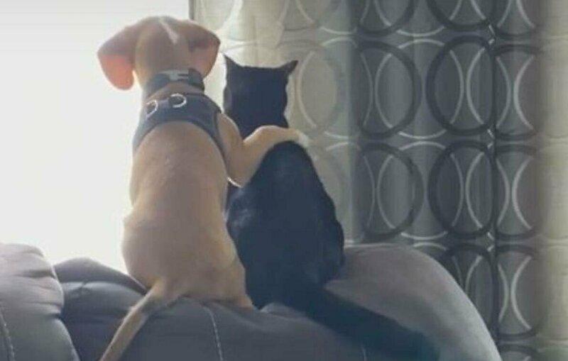 Лучшие друзья: щенок и котенок наблюдают за птицами