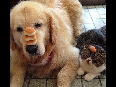 Доказательства дружбы котов и собак