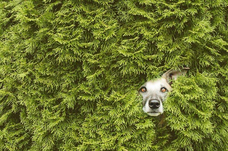 Эмоциональные портреты собак от профессионального фотографа