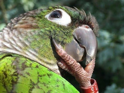 Самые смешные попугаи