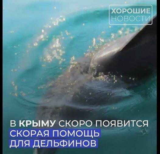 В Крыму начнет работать «скорая» для дельфинов