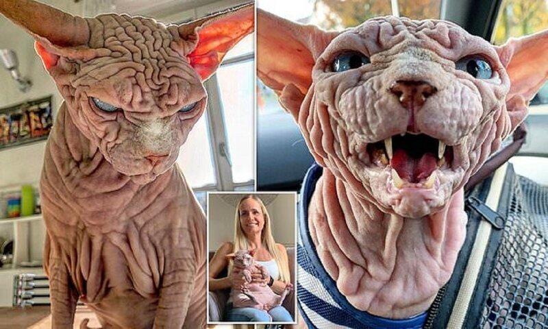 Найден самый сердитый кот в мире!