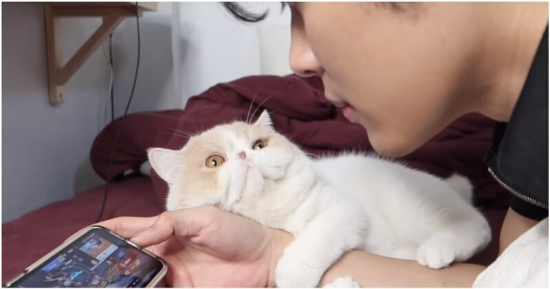 Котик требует от хозяина внимания