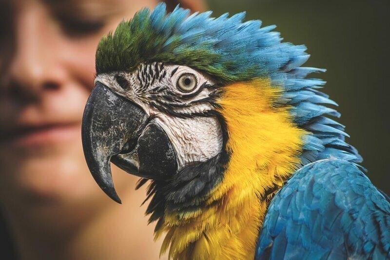 Почему попугаи наделены «речью»?