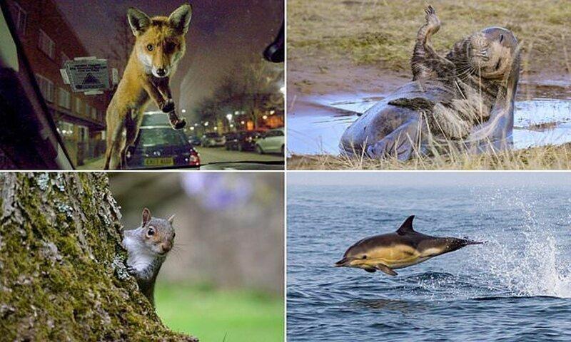 Победители конкурса любительской фотографии Mammal Photographer of the Year