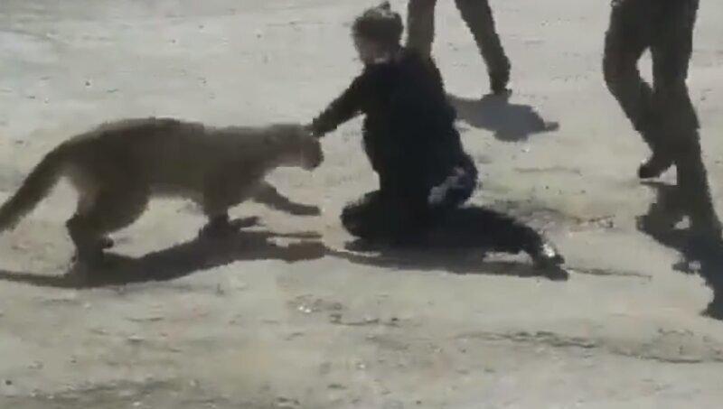 Полицейским удалось отбить свою коллегу у пумы