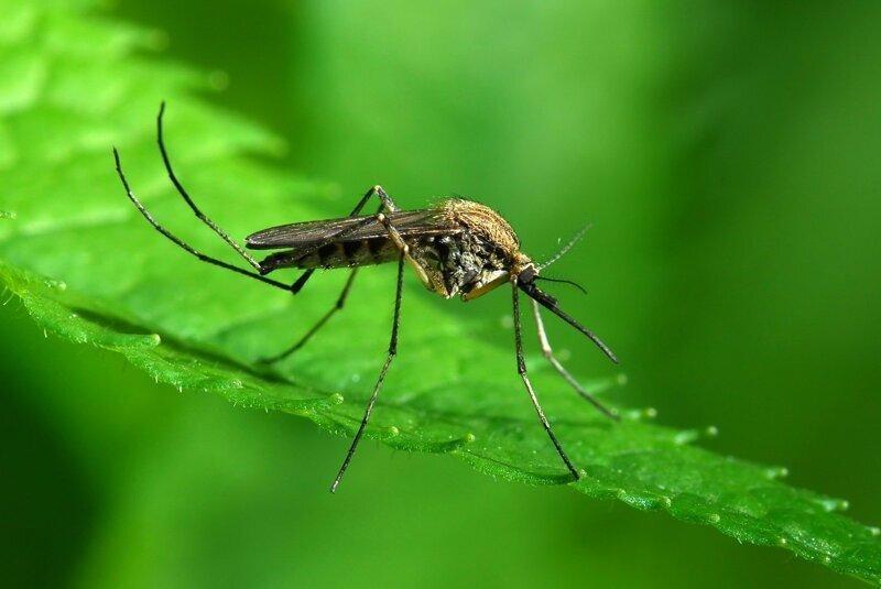 Комары и клещи готовятся к атаке: как стать для них «невкусными»?