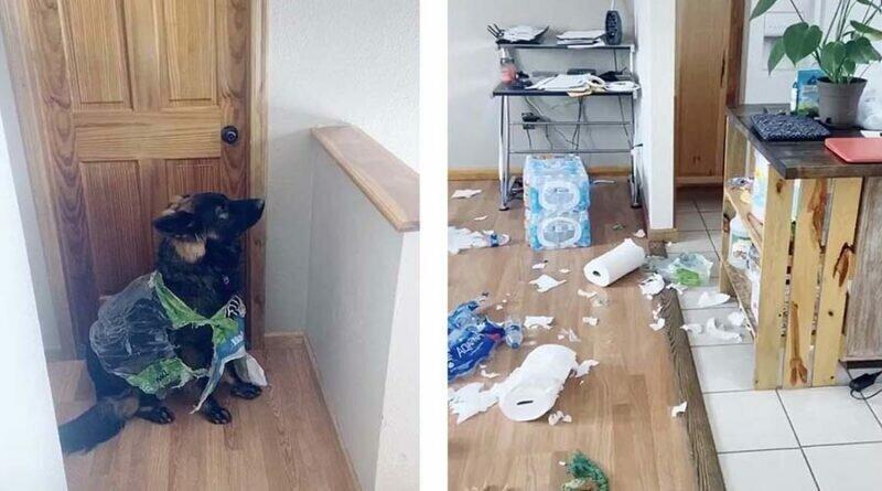 Собака уничтожила весь запас туалетной бумаги
