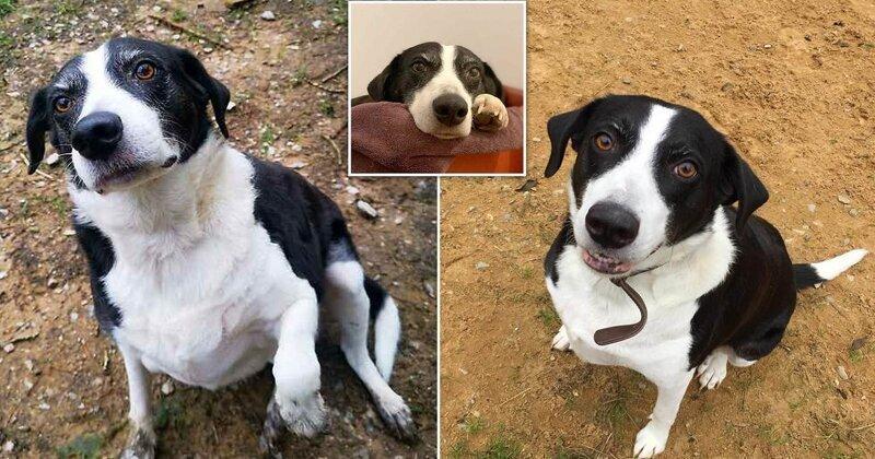 """10 лет одиночества: """"самая одинокая собака"""" Великобритании обрела хозяев"""