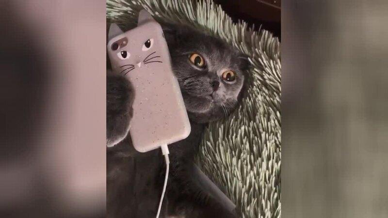 Кота возмутил долгий ответ техподдержки