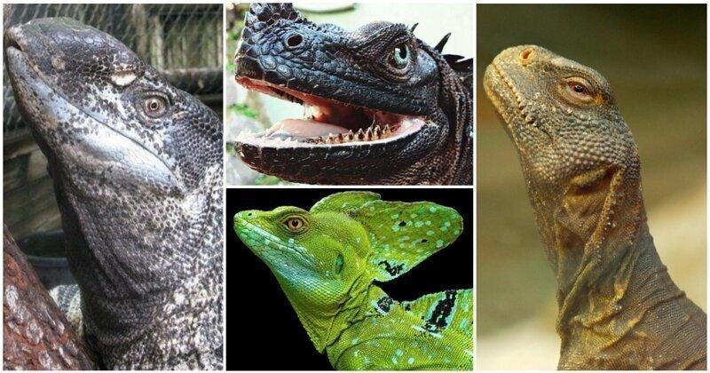 25 доказательств того, что динозавры по-прежнему с нами