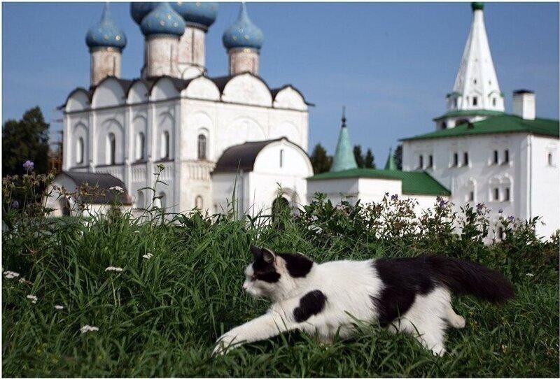 По Золотому кольцу России вместе с местными котиками