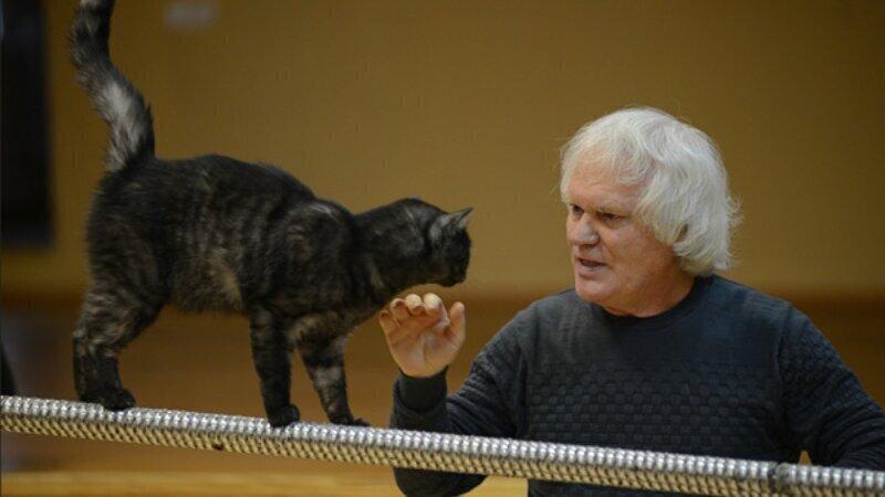 Оказывается, котики тоже против коронавируса!