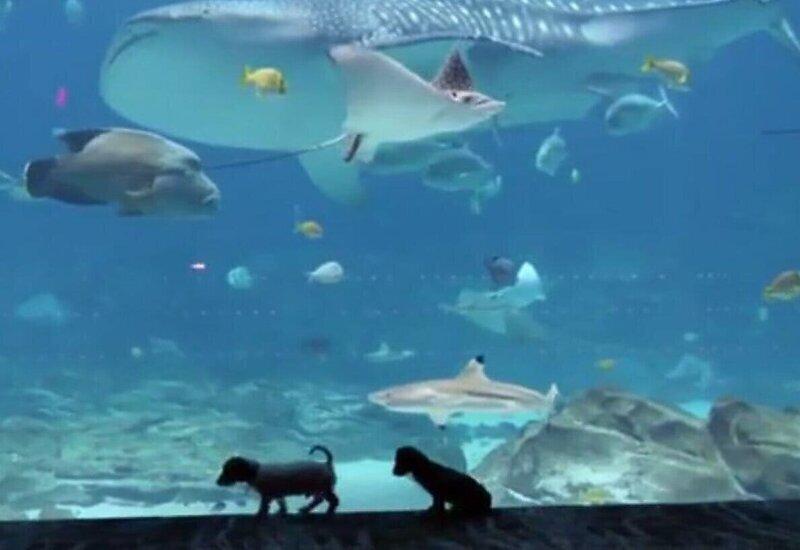 Щенки погулялись по пустому океанариуму в США