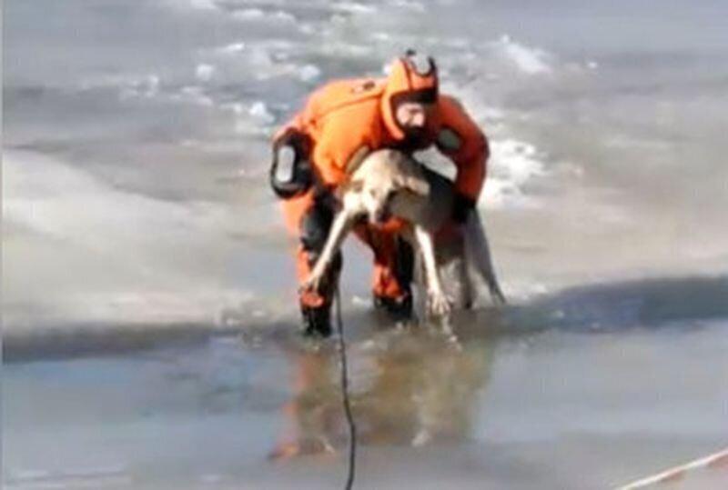 Спасение провалившейся под лед собаки в Кургане