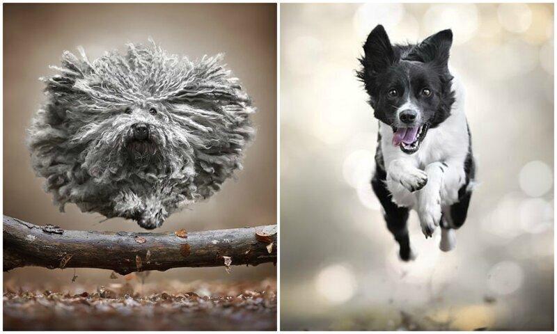 """Сколько эмоций! """"Летающие"""" собаки в объективе итальянского фотографа"""