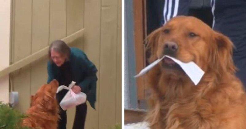 Собака помогает пенсионерке на карантине покупать продукты