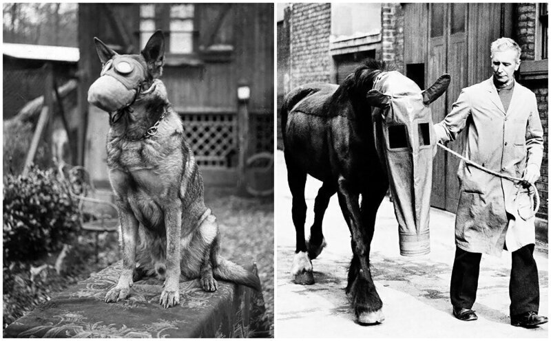 Животные в противогазах во время Первой мировой войны