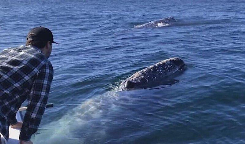 Самоизолирующиеся на катере туристы привлекли внимание китов
