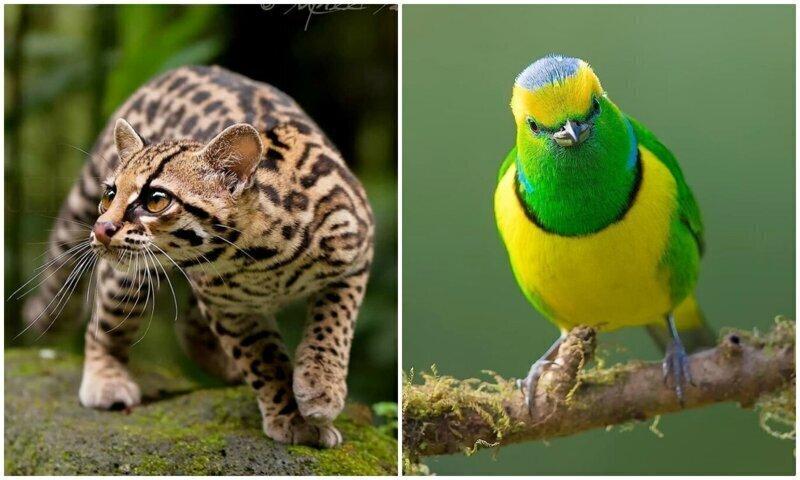 Удивительные обитатели тропических лесов Коста-Рики