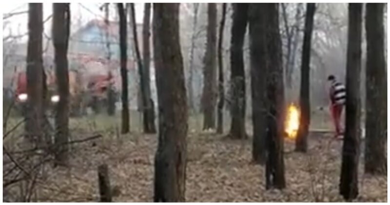 Мужчина попытался пожарить шашлыки в лесу во время карантина
