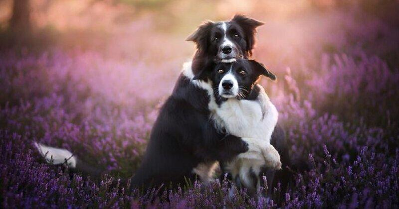 Собаки как люди: трогательные портреты друзей человека